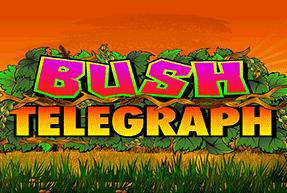 BushTelegraph